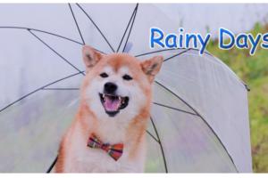 わんちゃんの雨の日